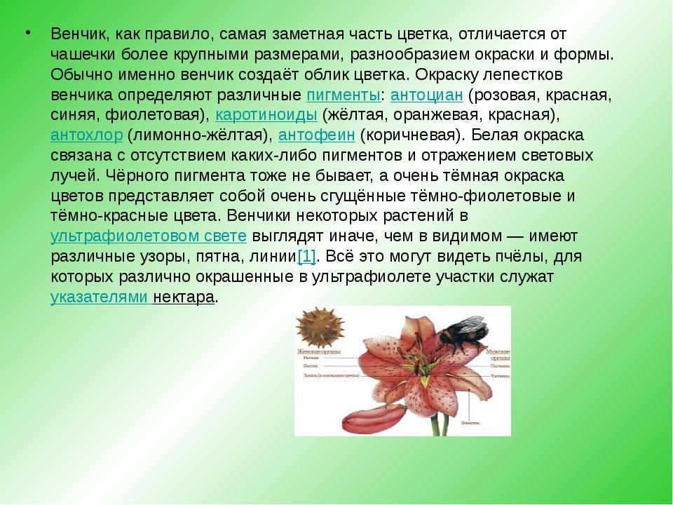 Венчик, как правило, самая заметная часть цветка, отличается от чашечки боле...