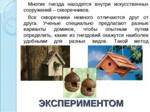 ЭКСПЕРИМЕНТОМ Многие гнезда находятся внутри искусственных сооружений – сквор