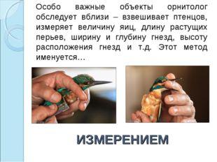 ИЗМЕРЕНИЕМ Особо важные объекты орнитолог обследует вблизи – взвешивает птенц