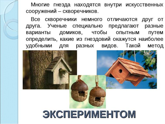 ЭКСПЕРИМЕНТОМ Многие гнезда находятся внутри искусственных сооружений – сквор...
