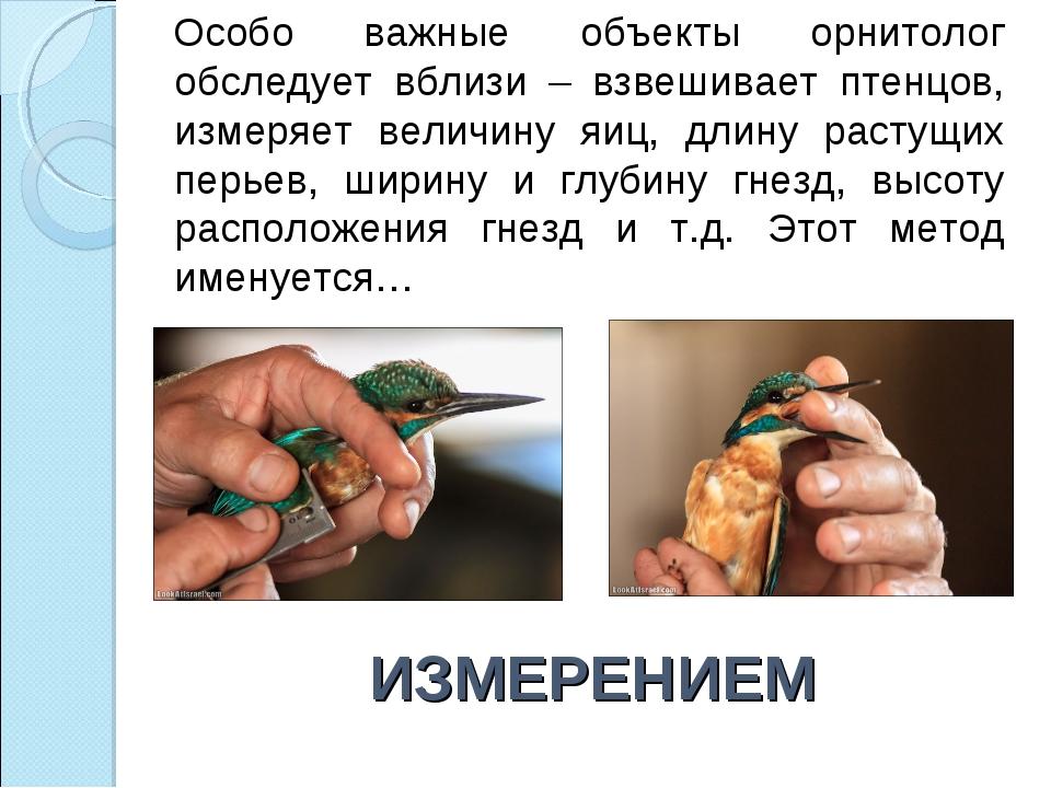 ИЗМЕРЕНИЕМ Особо важные объекты орнитолог обследует вблизи – взвешивает птенц...