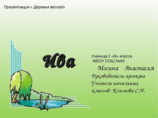 Презентация « Деревья весной» Ива Ученица 2 «В» класса МБОУ СОШ №49 Мосина Ан...