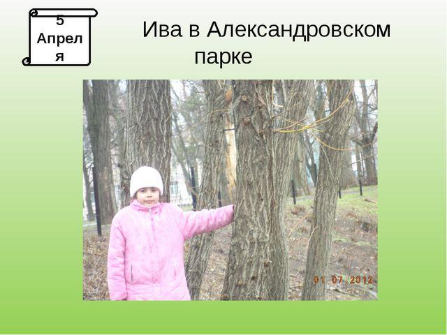 5 Апреля Ива в Александровском парке