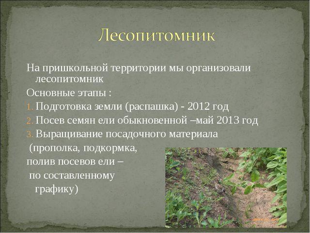 На пришкольной территории мы организовали лесопитомник Основные этапы : Подго...