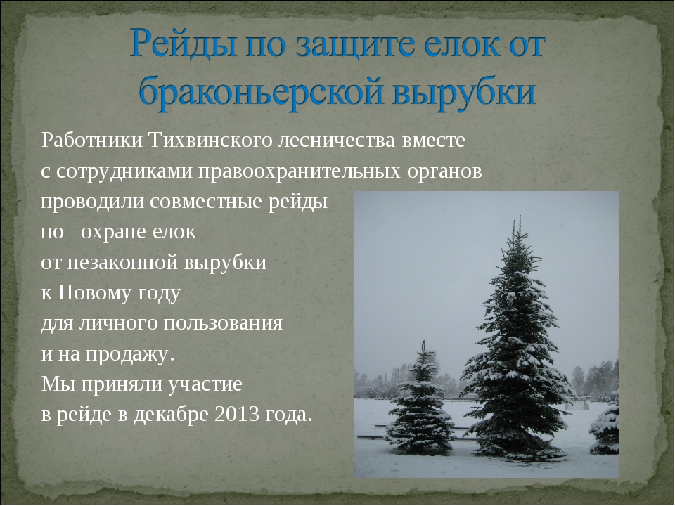 Работники Тихвинского лесничества вместе с сотрудниками правоохранительных ор...