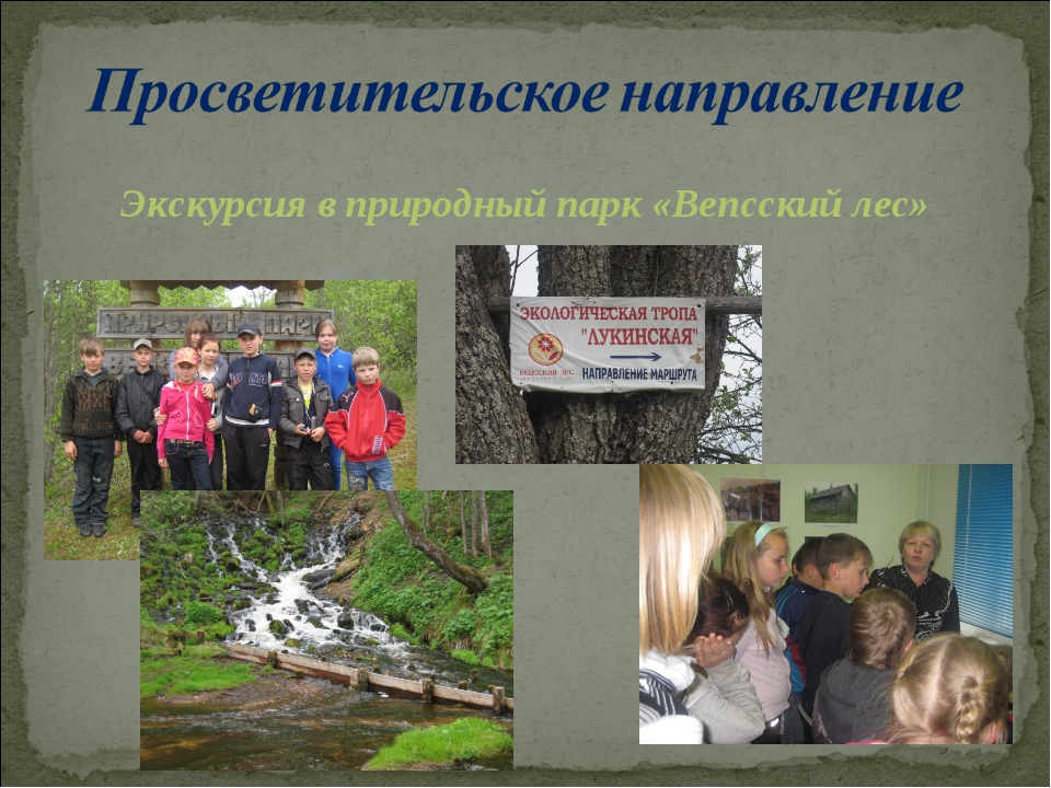 Экскурсия в природный парк «Вепсский лес»