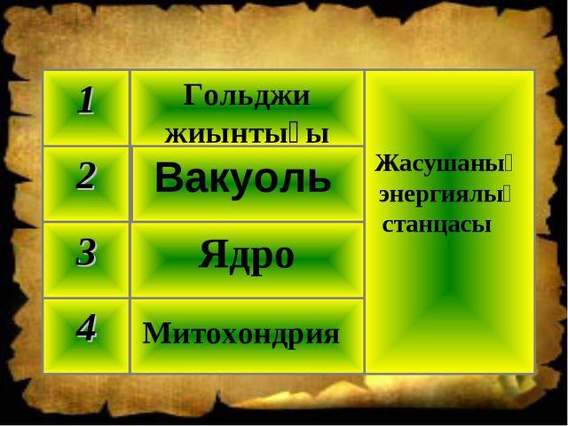 Митохондрия 4 Ядро 3 Вакуоль 2 Жасушаның энергиялық станцасы Гольджи жиынтығы 1
