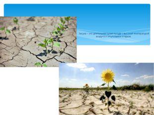 Засуха – это длительная сухая погода с высокой температурой воздуха и отсутс