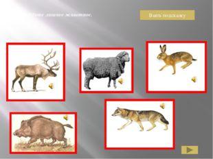 Тигр, рысь, кошка, лев – из семейства кошачьих. Медведь к ним не относится.