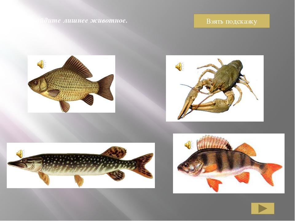 Карась, щука, ерш – рыбы. Рак рыбой не является.