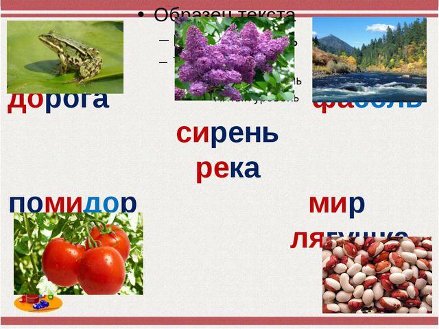 дорога фасоль сирень река помидор мир лягушка Учитель начальных
