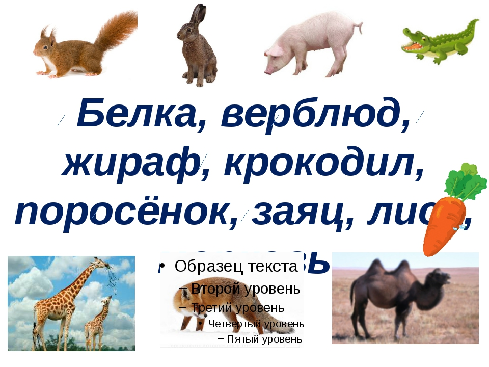 Белка, верблюд, жираф, крокодил, поросёнок, заяц, лиса, морковь Учитель начал...