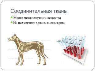 Соединительная ткань Много межклеточного вещества Из нее состоят хрящи, кости