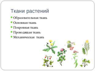 Ткани растений Образовательная ткань Основная ткань Покровная ткань Проводяща