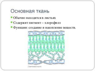 Основная ткань Обычно находится в листьях Содержит пигмент – хлорофилл Функци
