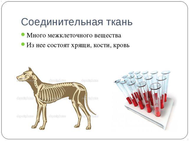 Соединительная ткань Много межклеточного вещества Из нее состоят хрящи, кости...