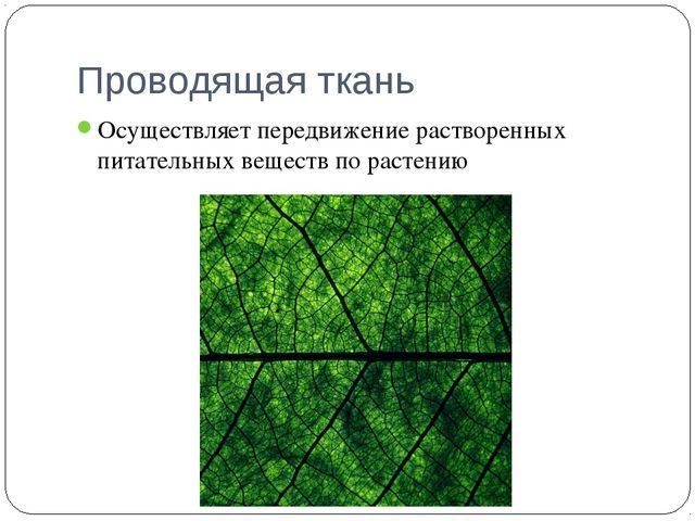 Проводящая ткань Осуществляет передвижение растворенных питательных веществ п...