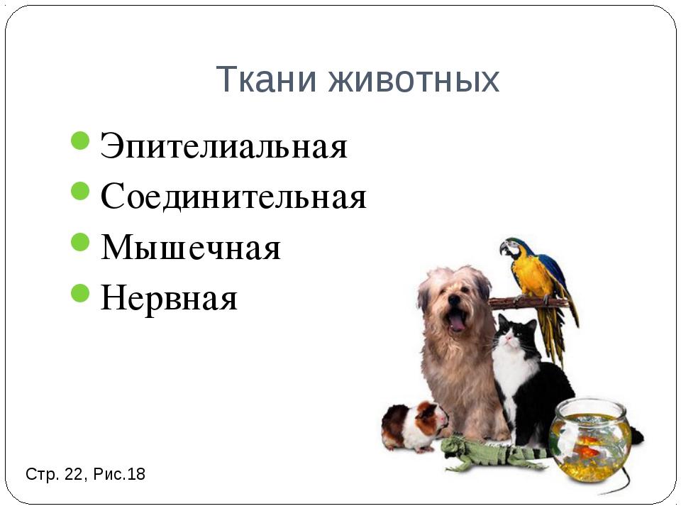 Ткани животных Эпителиальная Соединительная Мышечная Нервная Стр. 22, Рис.18