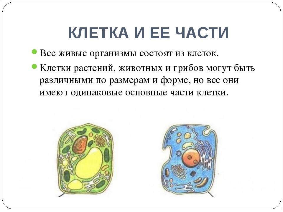 КЛЕТКА И ЕЕ ЧАСТИ Все живые организмы состоят из клеток. Клетки растений, жив...