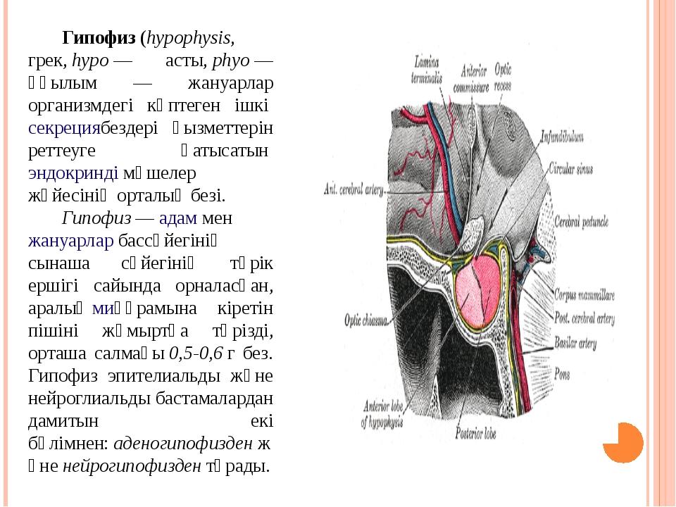 Гипофиз(hypophysis, грек,hypo— асты,phyo— құылым — жануарлар организмде...