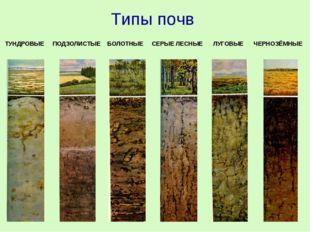 ТУНДРОВЫЕ ПОДЗОЛИСТЫЕ БОЛОТНЫЕ СЕРЫЕ ЛЕСНЫЕ ЛУГОВЫЕ ЧЕРНОЗЁМНЫЕ Типы почв