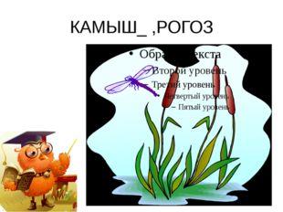 КАМЫШ_ ,РОГОЗ