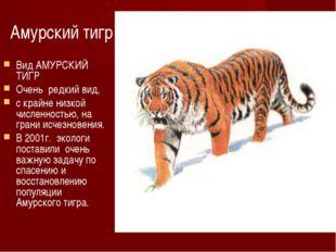 Амурский тигр Вид АМУРСКИЙ ТИГР Очень редкий вид, с крайне низкой численность