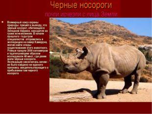 Черные носороги почти исчезли с лица Земли Всемирный союз охраны природы при