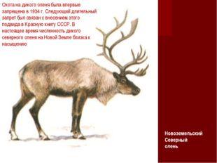 Охота на дикого оленя была впервые запрещена в 1934 г. Следующий длительный з