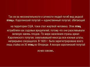 Так из-за несознательности и алчности людей погиб вид редкой птицы. Каролинск