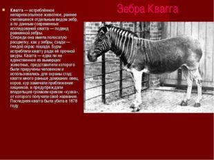 Зебра Квагга Квагга — истреблённое непарнокопытное животное, раннее считавше
