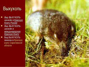 Выхухоль Вид ВЫХУХОЛЬ занесён в Красную Книгу России Вид ВЫХУХОЛЬ занесён в м