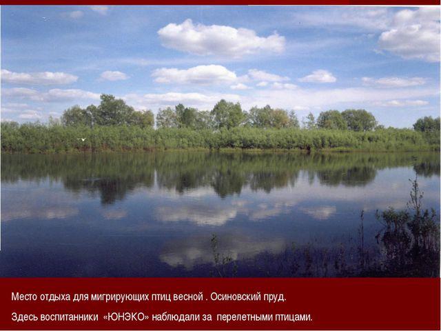 Место отдыха для мигрирующих птиц весной . Осиновский пруд. Здесь воспитанник...