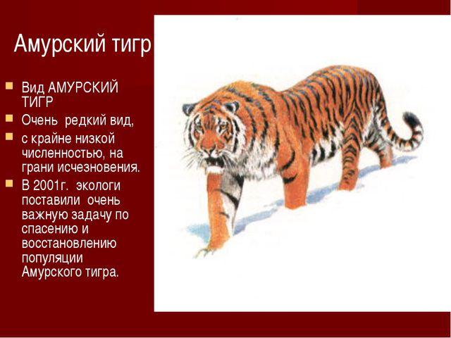 Амурский тигр Вид АМУРСКИЙ ТИГР Очень редкий вид, с крайне низкой численность...