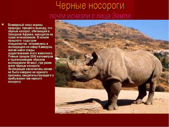 Черные носороги почти исчезли с лица Земли Всемирный союз охраны природы при...