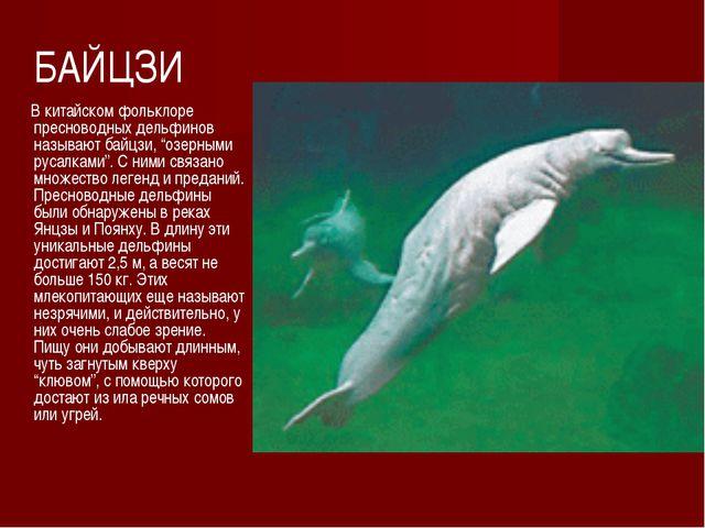"""БАЙЦЗИ В китайском фольклоре пресноводных дельфинов называют байцзи, """"озерным..."""