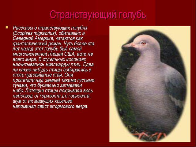 Странствующий голубь Рассказы о странствующих голубях (Ecopises migraorius),...