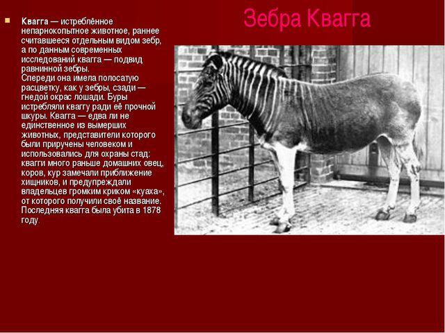 Зебра Квагга Квагга — истреблённое непарнокопытное животное, раннее считавше...