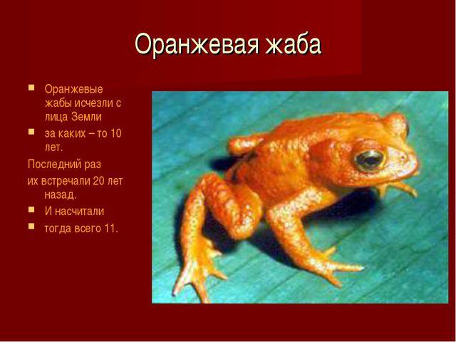 Оранжевая жаба Оранжевые жабы исчезли с лица Земли за каких – то 10 лет. Посл...
