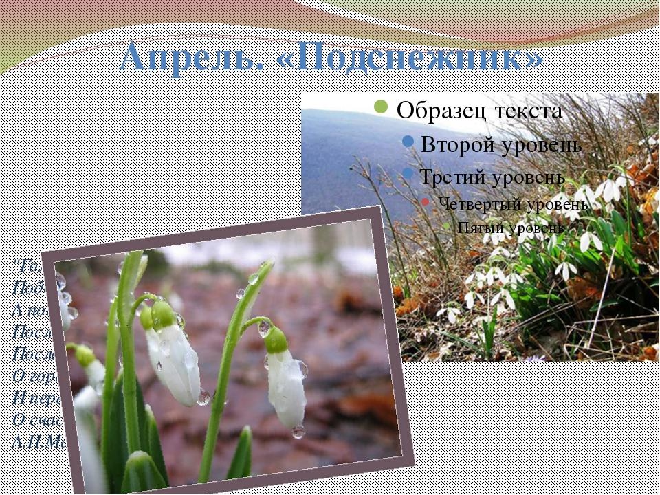 """Апрель. «Подснежник» """"Голубенький чистый Подснежник: цветок, А подле сквозист..."""