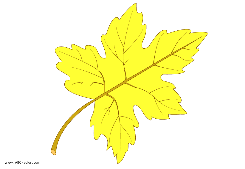 maple-leaf-picture-color.png