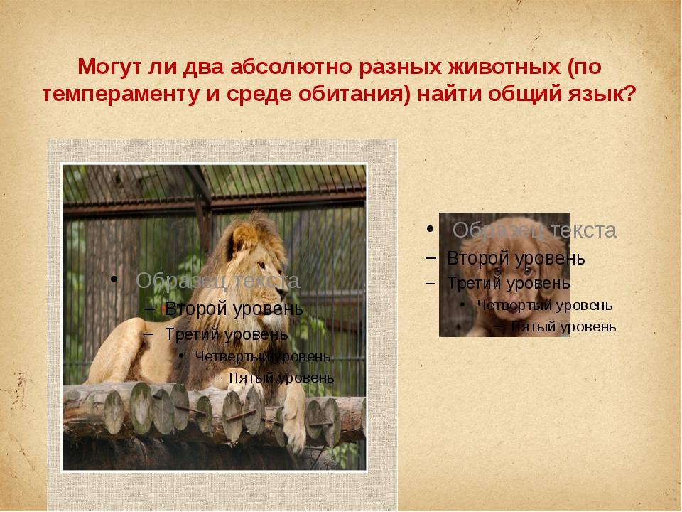 Могут ли два абсолютно разных животных (по темпераменту и среде обитания) най...