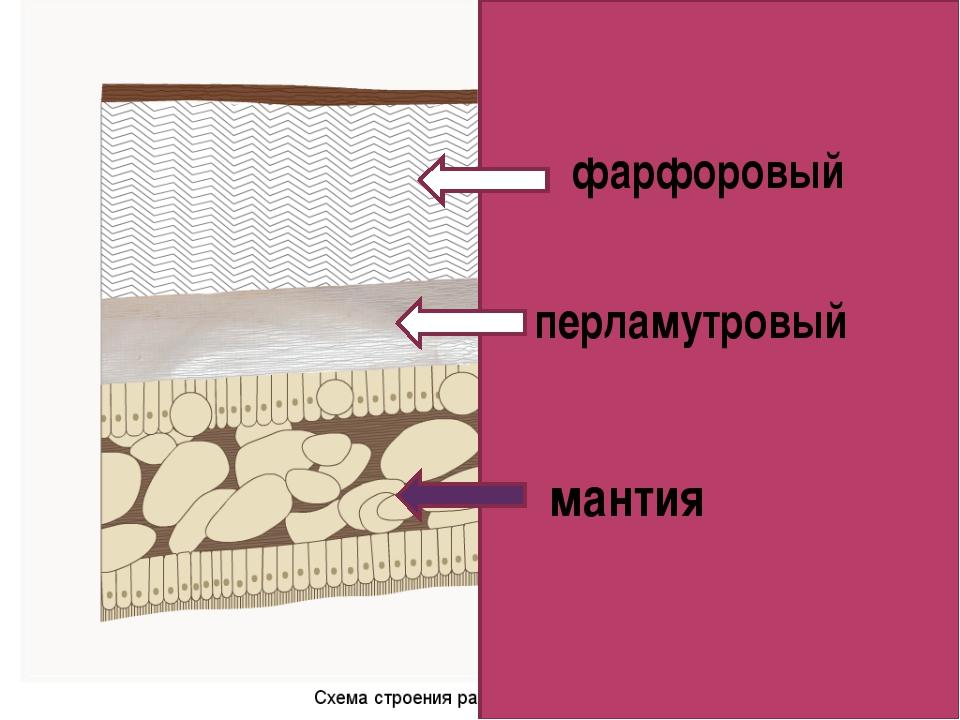 фарфоровый перламутровый мантия