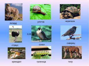 черепаха улитка гепард сокол страус скворец тигр гусеница крокодил 0,0014 м/с