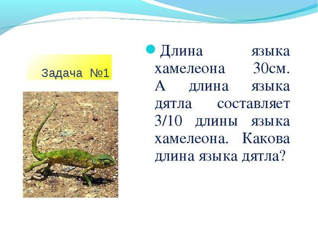 Задача №1 Длина языка хамелеона 30см. А длина языка дятла составляет 3/10 дл...