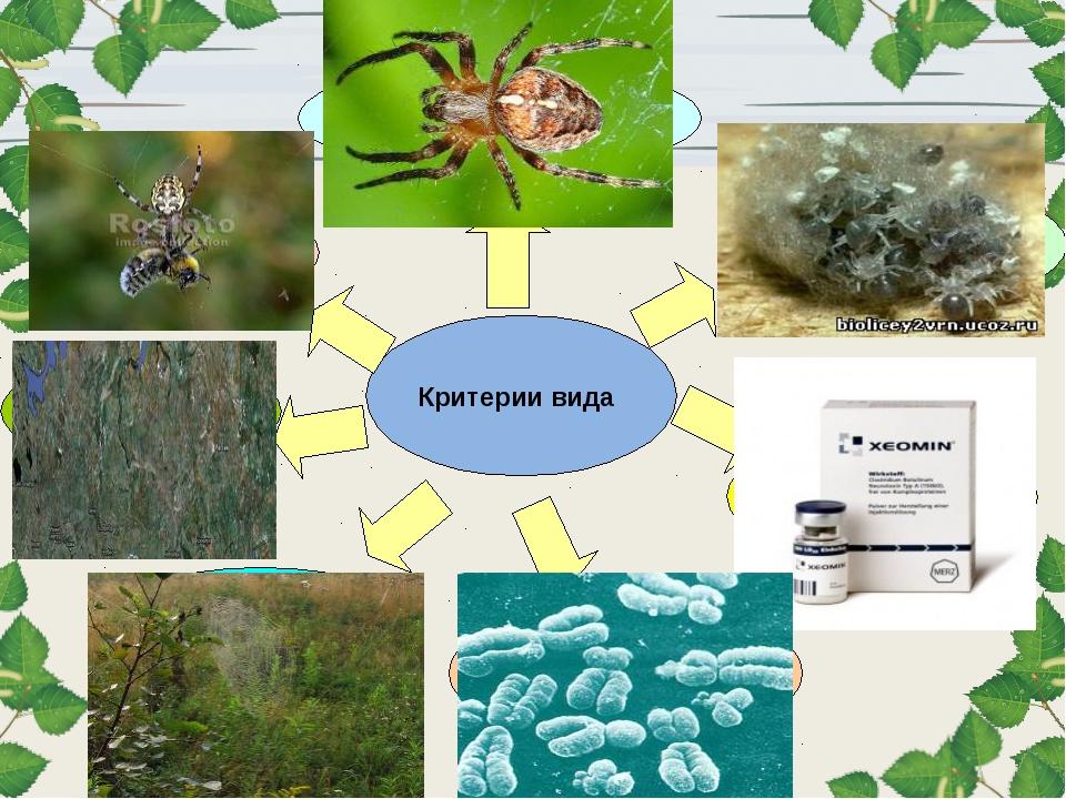 Критерии вида Морфологический Физиологический Биохимический Экологический Ген...