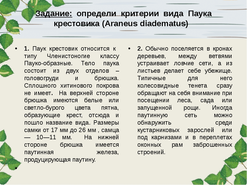 Задание: определи критерии вида Паука крестовика (Araneus diadematus) 1. Паук...