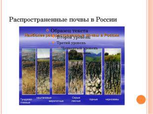 Распространенные почвы в России
