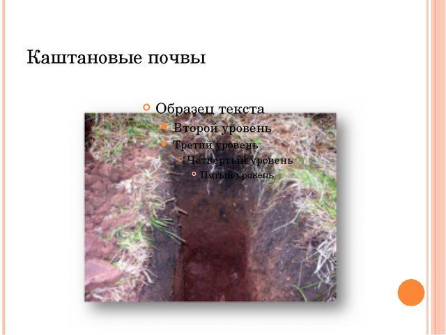 Каштановые почвы