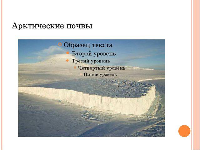 Арктические почвы